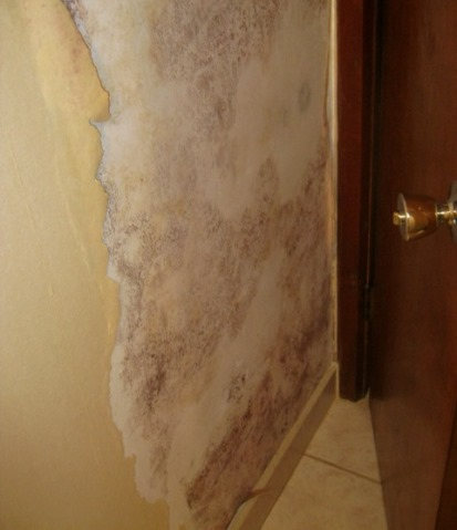 Large amount of mold under wallpaper