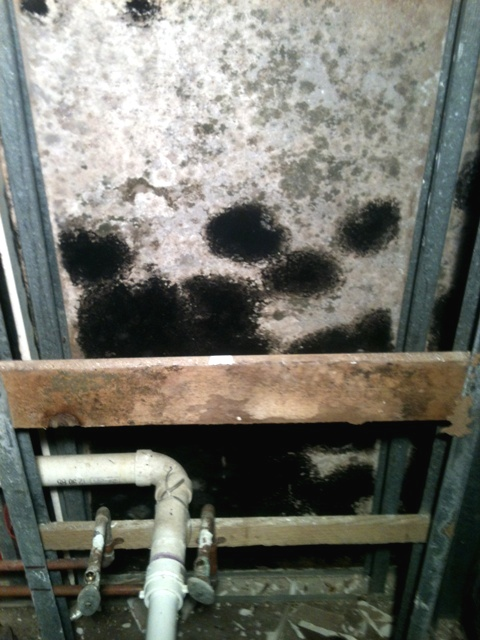 Black mold on a wall after a flood