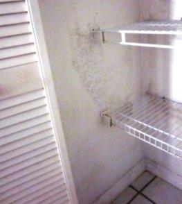 Kitchen pantry mold