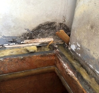 Black mold on walls and trim