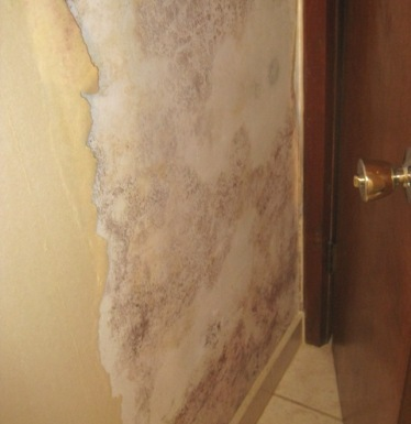 Mold behind wallpaper