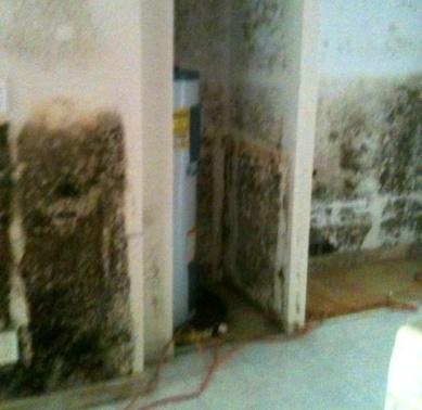 Mold after a flood