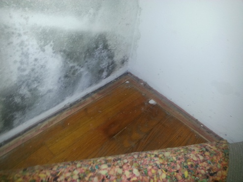 Black mold in a closet