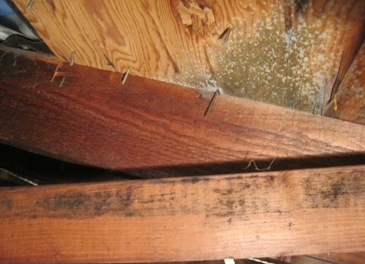 attic with mold