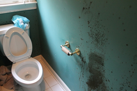 bathroom mold prevention