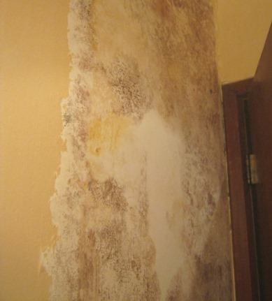 Black mold found growing behind wallpaper