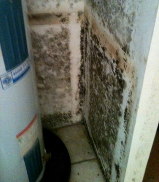 Black mold in hot water heater closet