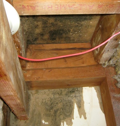 Danger of black mold
