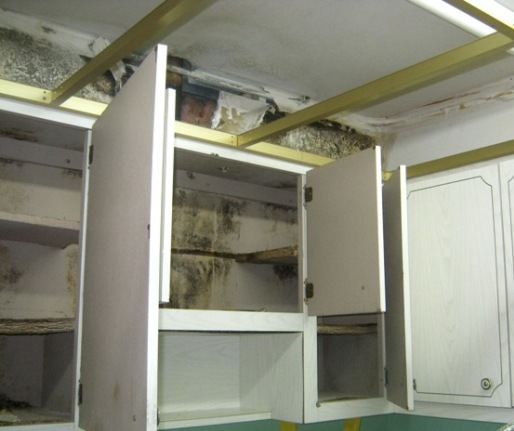 Mold Remediation Costs Diy Vs Using A Professional