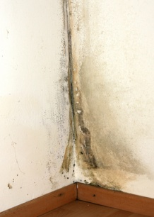 Effects of Black Mold