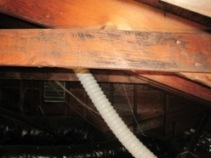Black mold attic photo