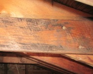 Black mold picture in attic