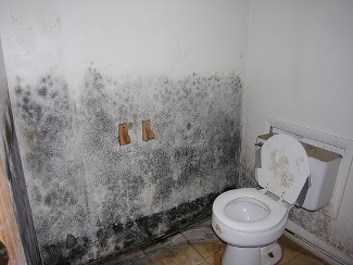 Black Mold Picture in Bathroom