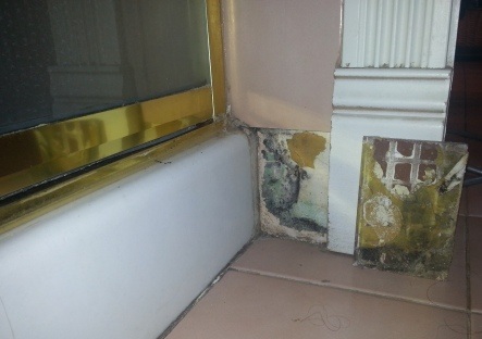 Black Mold Sickness ............Symptoms, Treatment, Cleanup