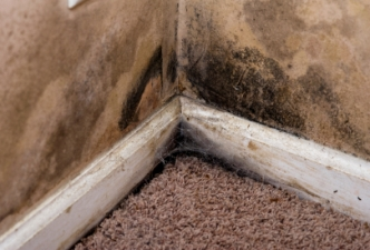 carpet water damage mold