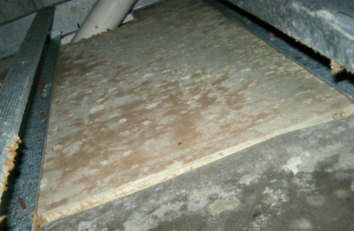 Toxic mold in crawlspace