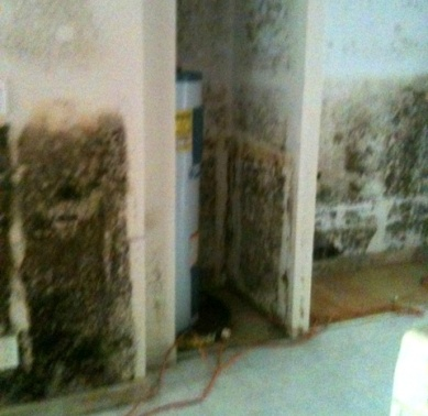 Mold after a flood