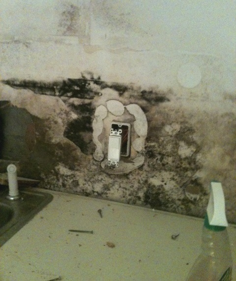 Kitchen with mold after a flood