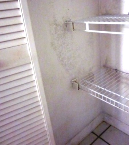 Kitchen pantry mold