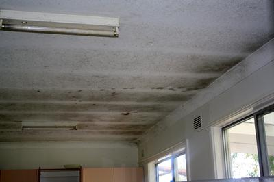 Mold kitchen