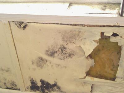 Mold under the living room window