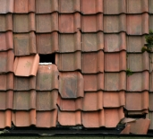 Leaky roof leads to mold growth