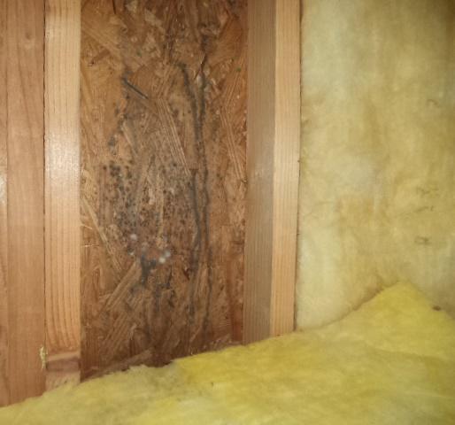 Allergy Mold Spore Count Indoor Vs Outdoor Mold