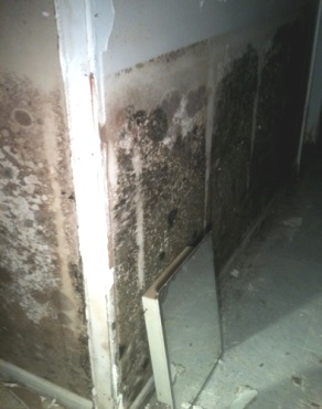 Mold in a basement after a flood