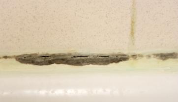 Mold on bathroom tiles