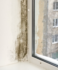 Black Mold in Houses
