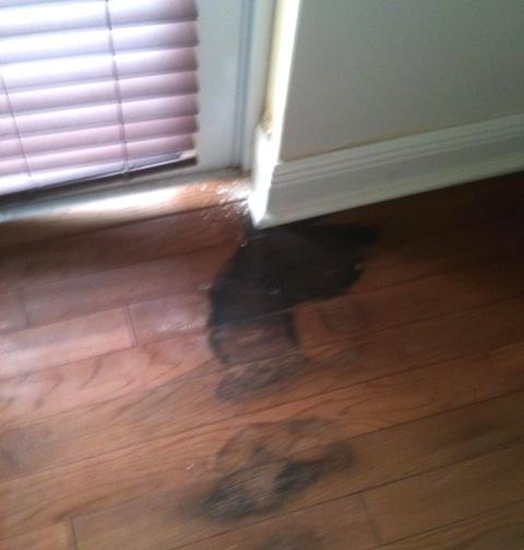 Mold under hardwood floor