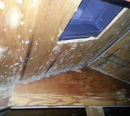 White Attic Mold
