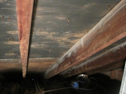 Attic Mold Photo