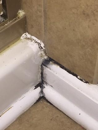 bathroom mold leak