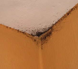 Black mold on ceiling and walls