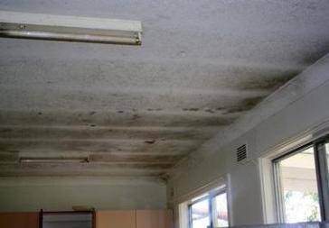 Mold On Kitchen Ceiling