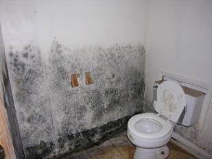 Black Mold Photos Bathroom Pic