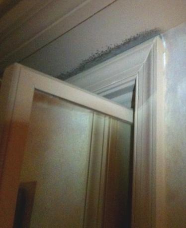 Black mold above closet door