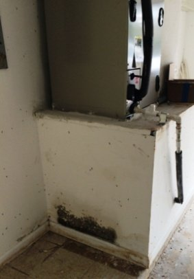 Mold from air conditioner leak