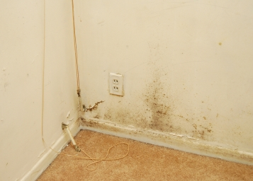 mold walls removing mold from walls. Black Bedroom Furniture Sets. Home Design Ideas