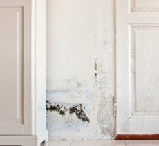Mold on wall and door