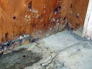Water damage mold